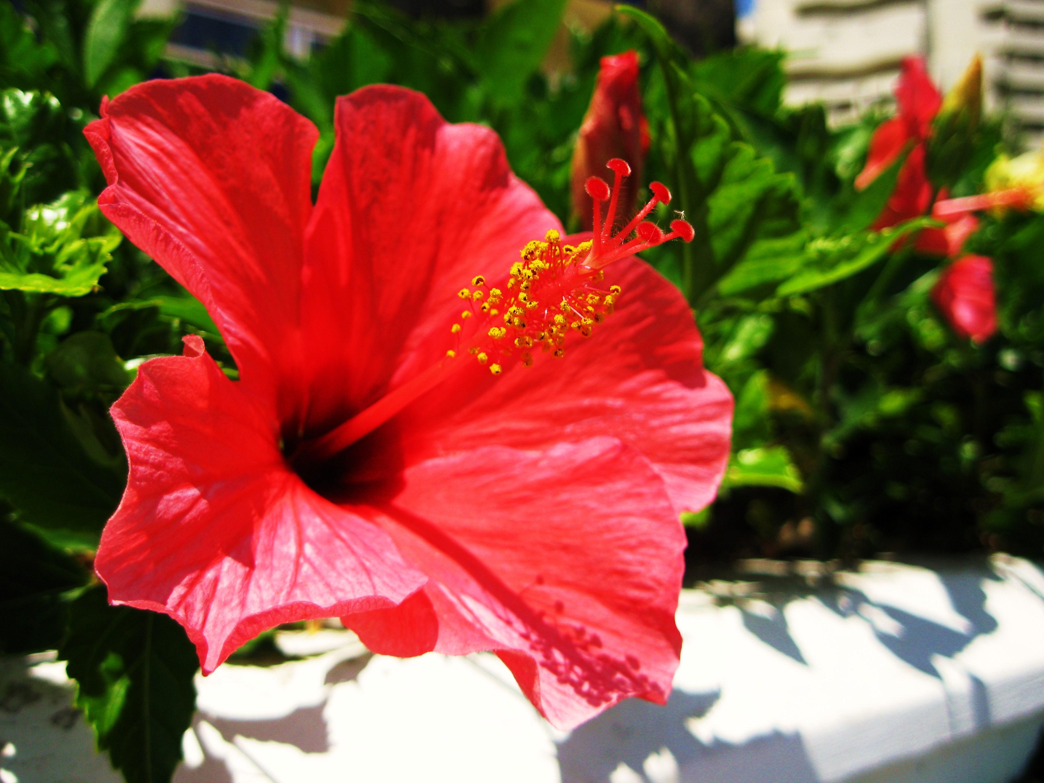 Fotos de benalmdena of fountains and flowers days 5 and 6 how beautiful izmirmasajfo